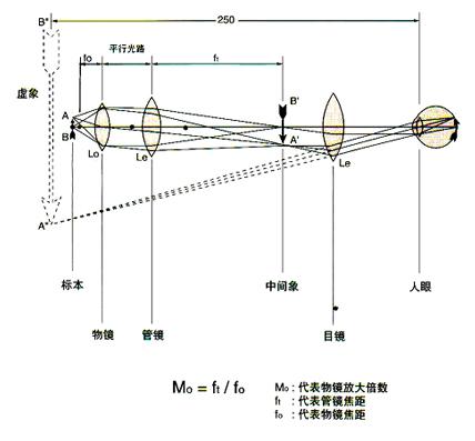 生物显微镜原理